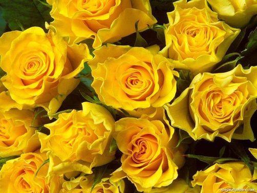 Resultado de imagen para rakelpossi rosa amarela